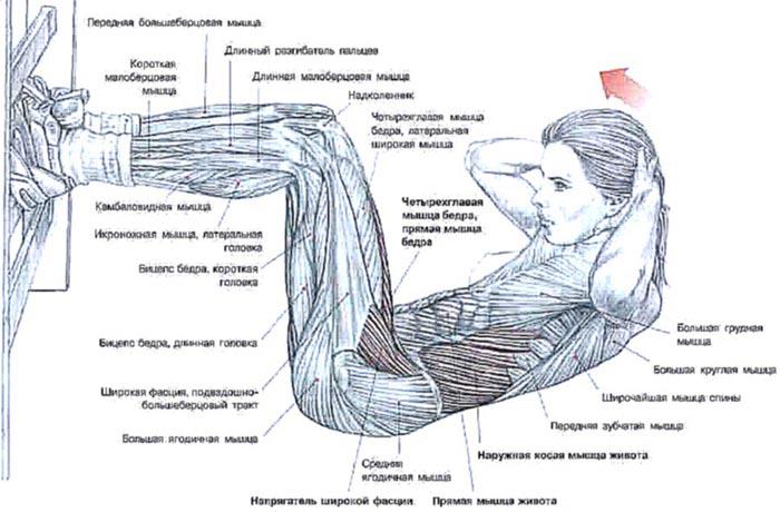 Как быстро накачать мышцы в домашних условиях 77